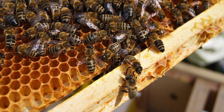 Exkurze na včelí farmě pro 2 či 4: teoretická a praktická část i výroba svíček