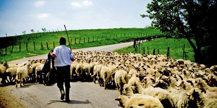 Rumunský Banát: bydlení u krajanů, venkovská romantika, tradiční kuchyně