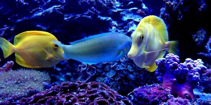 Výlet do Tropicaria v Budapešti, rozlohou největšího akvária ve střední Evropě