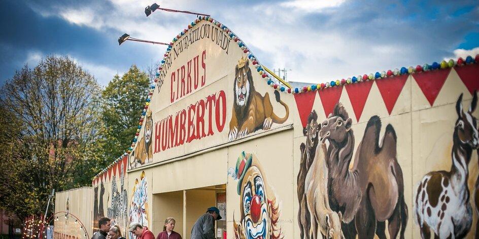 Do cirkusu s dětmi: ano, či ne?