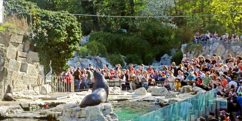 Hurá za pandami: mama blogerka ve vídeňské zoologické zahradě