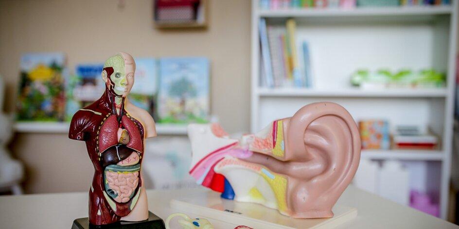 Co skrývá lidský trup a ucho? EDU otestovala dětská lékařka