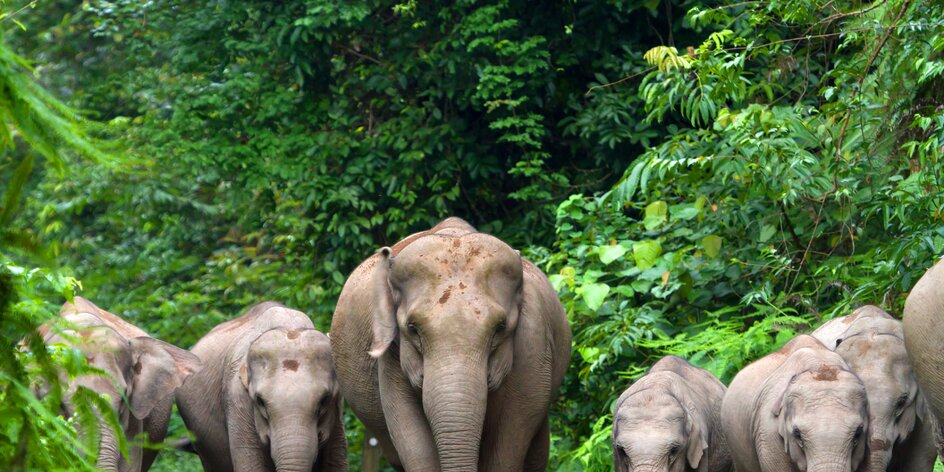 Proč byste v Asii NIKDY neměli jezdit na slonovi