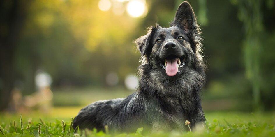 Veterinář radí: V létě dávejte pozor na přehřátí psa, osiny v tlapkách i tzv. hot spot