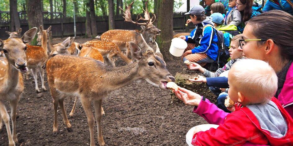 Zookoutek Chuchle: jelen a jeho harém a poznávačka kůží a paroží