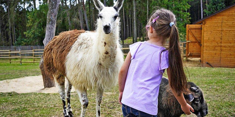 V Zoo Tábor uvidíte bílé klokany i nakrmíte velbloudici Frídu