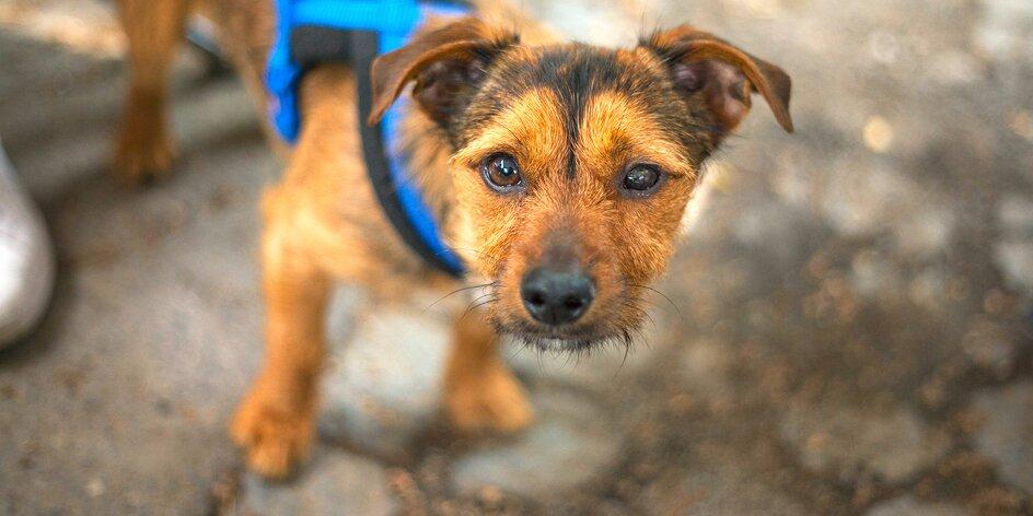 Národ pejskařů, nebo odkladačů? Proč naši psi končí v útulcích čím dál častěji?