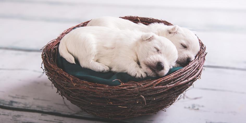 Fotografování psů a mazlíčků v ateliéru