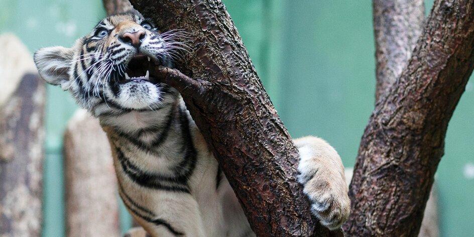 Fotokurz v zoo: za 6 hodin ruka a oko profíka