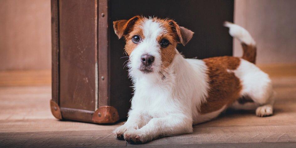 Hlídání pejska: až 20 vstupů do psí školky