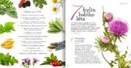 Předplatné magazínu Bylinkář i kalendář na 2020