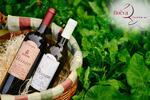 Červená vína z Makedonie: Shiraz i Dissan Barrique