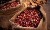 500 g čerstvě mleté zelené kávy Santos z Brazílie