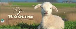 Hřejivá vesta nebo ledvinový pás z ovčí vlny