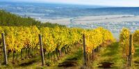 Wellness pobyt ve Valticích s ochutnávkou vín
