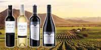 Set 4 nebo 6 lahví kvalitního vína ze svahů And