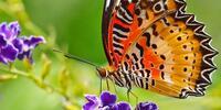 Vstupenky do tropické zahrady plné motýlů