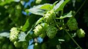Wellness víkend ve městě chmelu a piva