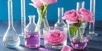 Vyrobte si nápoj lásky: Přírodní afrodiziaka