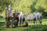 Zážitková jízda na velbloudovi v Uhrovic mlýně