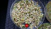 Třípatrová biomiska na klíčení a výběr 22 druhů semen
