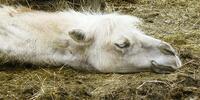 Výlet za zvířátky na Ranč U Kulhavého velblouda