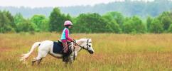 3 hodiny s koňmi - Péče o koně a projížďka v přírodě