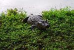 Brazílie a Pantanal: záloha na 16denní zájezd