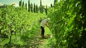 Kouzlo italských vinic: Vína z rodinných vinařství