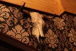 Až 6 půllitrových Hoegaardenů u Riegrových sadů