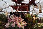 Výstava orchidejí v Rakousku a návštěva Vídně