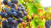 Špičková přívlastková vína ze Sardinie