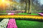 Výlet do parku Keukenhof a Amsterdamu