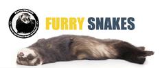 Furry Snakes: Výstava fretek s olympiádou