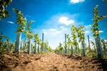 6 přívlastkových vín z vinařského ráje Slovácka