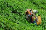 5 speciálních čajů z Nepálu v krásných měšcích