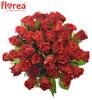 Rudé růže El Toro se vzkazem a možným rozvozem