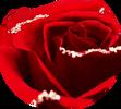 Luxusní růže, které vydrží několik let