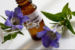 Bachovy květové esence v 30ml lahvičce